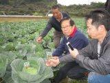 Verdura che pianta con il fertilizzante microbico del terreno di Unigrow
