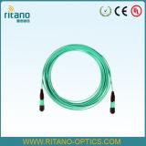 Trecce ottiche del nastro della fibra di MPO-LC