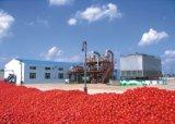 Máquina de processamento pequena do tomate