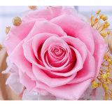 Il fiore duraturo naturale all'ingrosso ha asciugato le rose conservate del coperchio di vetro
