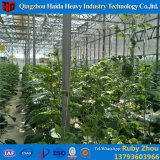 Agricultural&Nbsp; Greenhouse&Nbsp; 회전 콘테이너 Producehydroponic