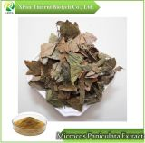 Polvere dell'estratto di Microcos Paniculata/Microcos Paniculata L.
