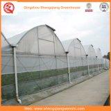 Chambres vertes de pellicule de fleur/fruit/de polyéthylène culture de légumes avec le système de parasol