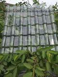 Polycarbonate opale 840mm PC solide feuille de carton ondulé pour créer du matériel