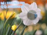 CAS 65277-42-1 API наркотиков не Dbdmh1 Dongkangyuan промышленности