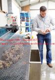 Anti-UVhdpe Austeren-Ineinander greifen-Beutel, Austeren-Ineinander greifen, Austeren-wachsender Beutel