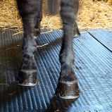 Het Matwerk van het Paard van de koe/Rubber Stabiele Mat/het RubberMatwerk van de Landbouw