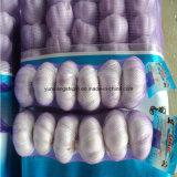 Новую Культуру Китая фиолетовый цвет чеснок