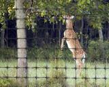 Net van de Veiligheid van de Tuin van de anti-vogel het Opleverende Opleverende met UV Bestand
