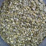 El nuevo cultivo Snow White semillas de calabaza de Shandong Guanghua