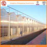 Agricultura/invernadero comercial de la manía del policarbonato con el sistema de ventilación