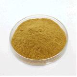 Acide chlorogène 25% Extrait de fleur de miel et de miel Extrait de Lonicera Japonica