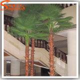 Decoração do hotel Planta de fibra de vidro de plástico Palma artificial