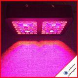 Heißes Produkt 300W LED wachsen für medizinische Hanf-Pflanze hell