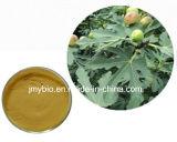 100% wasserlöslicher organischer Flavon-Feige-Blatt-Auszug, 10:1