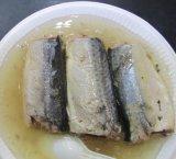 As conservas de peixe sarda em Molho de Tomate 155g