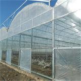 strato libero del policarbonato di 10mm per la serra