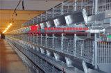 [جينفنغ] تصميم آليّة دجاجة قفص لأنّ عمليّة بيع في مزرعة [إيندين]