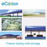 Armazenamento frio personalizado de secagem de gelo da grande escala de baixa temperatura com a fábrica de tratamento para vegetais e frutas