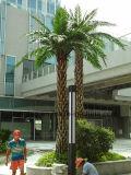 밖으로 문 쇼핑 센터 훈장을%s 은 대추 야자 나무