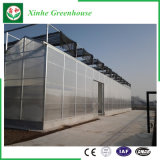 Einzelnes Überspannung PC Blatt-grünes Haus Pocarbonate Gewächshaus mit Wasserkultursystem