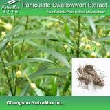 100% Naturalpaniculate Swallowwort извлечения (10: 1)