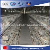 Клетка бройлера самого лучшего сбывания автоматическая для клетки цыплятины (тип)