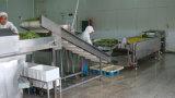 Горячее моющее машинаа воздушного пузыря моющего машинаы фрукт и овощ сбывания