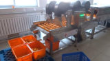 Equipamento de lavagem com bolhas de legumes e folhas