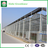 Земледелие/коммерчески стеклянный парник хоббиа с системой вентиляции