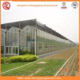 Glas-/Höhlung-ausgeglichenes Glas-Garten-Gewächshäuser für Blume