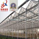Effet de serre en verre avec l'acier galvanisé à chaud de la structure de la floriculture