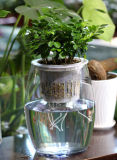 Fenêtre d'arrosage moderne de l'autonomie de la culture hydroponique Pots de fleurs en plastique
