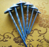'' glatter Kopf-Dach-Nagel des Regenschirm-9gx2.5 für Nigeria