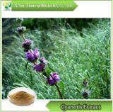Extracto de Cyanotis, Polvo /Ecdysterone