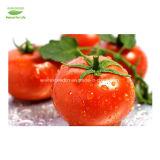 Высокое качество извлечения Lycopene CAS502-65-8 дешевле цена