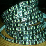 Tira impermeable los 60LEDs/M de Flexibe 24V 3528 SMD LED