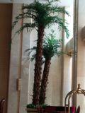Отель оформление искусственные сроки пальмами