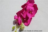 실크 꽃 새 집 홈 결혼식 축제 훈장을%s 인공적인 나방 난초 나비 난초