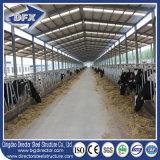 取除かれた農家牛家を入れている電流を通された鋼鉄農機具牛