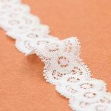 Merletto del merletto del testo fisso del merletto del tessuto del merletto della farfalla
