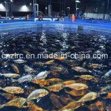 PlastikGRP/FRP/Fiberglass Fisch-Becken der Zlrc Verkaufs-Qualitäts-