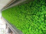 Piante di alta qualità e fiori artificiali del giardino verticale Gu-Mx-Green-Wall002