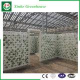 Heißes eingetauchtes galvanisiertes Rahmen-Glasgewächshaus mit Wasserkultursystem