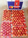 Красный четкие свежие Розовой Леди Apple