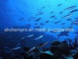 Certificación GMP en aceite de pescado Refinado, Aceite de pescado EPA18%DHA12% éster etílico (EE).