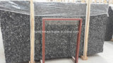 China fósil Negro / Mar Negro Shell losa de mármol