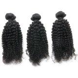 Kinky Curly Virgin Cheveux humains Commerce de gros meilleur sèche