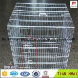 Prueba de óxido de jaula para conejos galvanizado / jaula de pájaros / metal anmial cesta