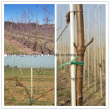 De Weerstand van de Corrosie van de Staak van de Steun van de wijngaard FRP Pool /Rod